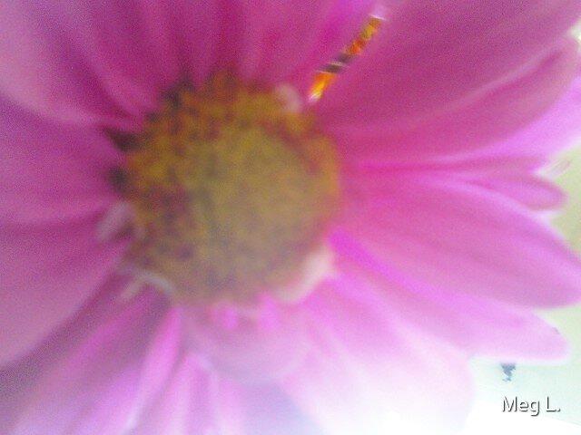 Mobile Phone Upload- Flower Power! by Meg L.