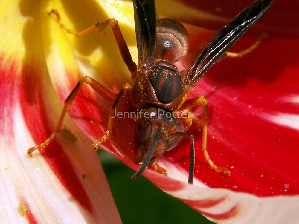 Wasp eating Aphids by Jennifer Potter