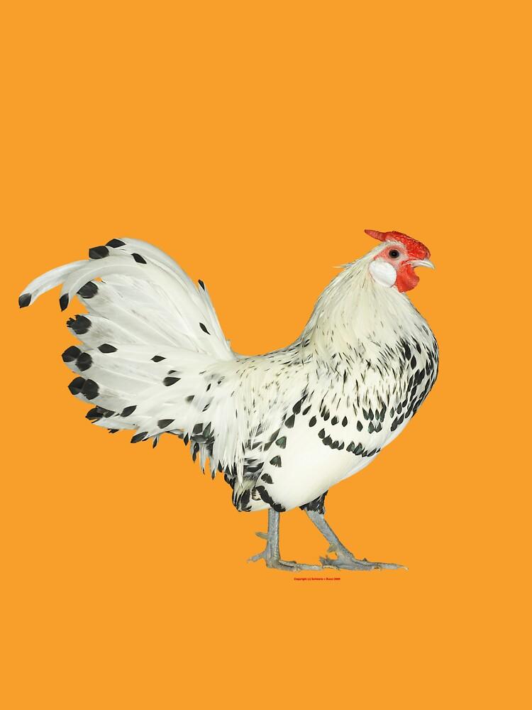 Hamburg Silver Spangled Cock by schwartz