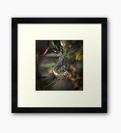 It Takes Two To Tango Framed Print