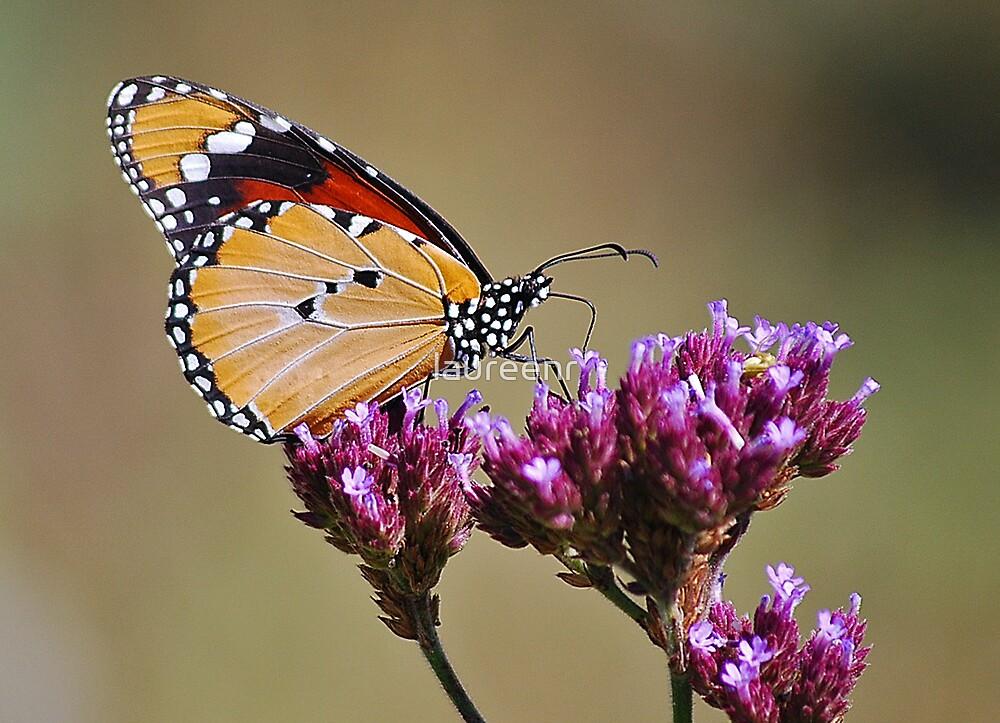 Monarch Butterfly by laureenr