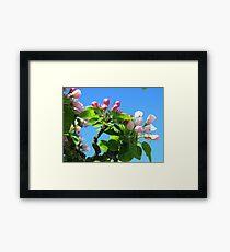 Pink Blossoms Blue Framed Print