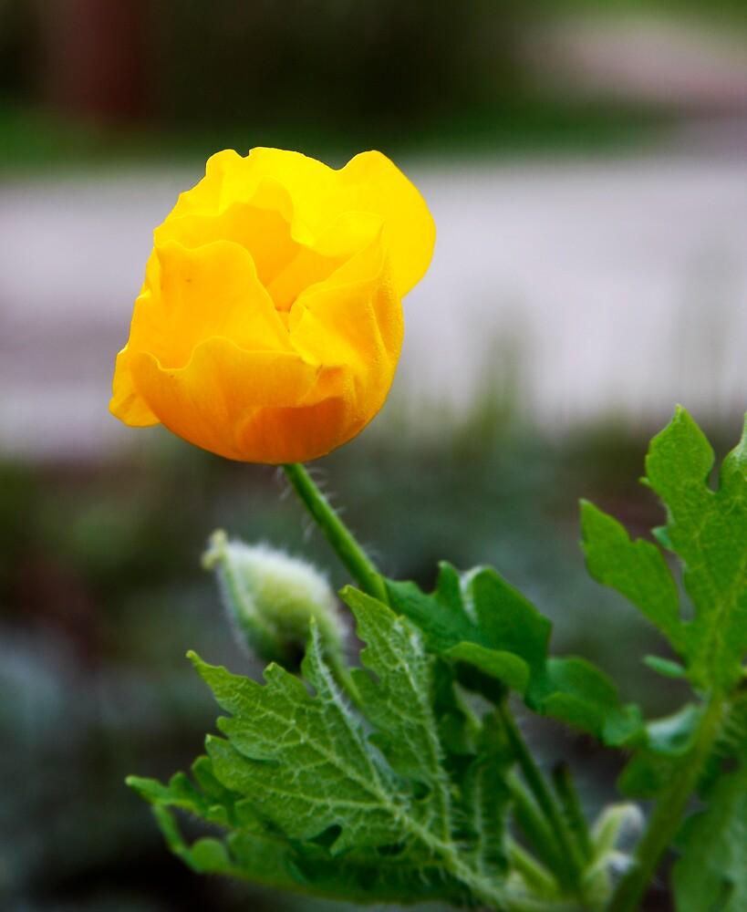 Wild Yellow by edjmc