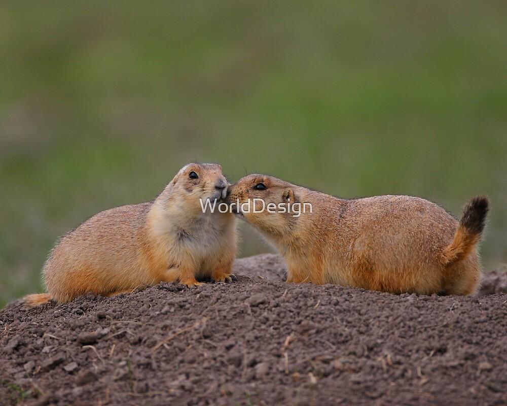 Prairie Dog Kiss by WorldDesign