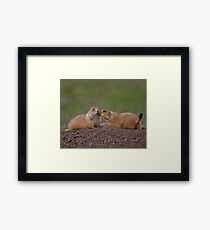 Prairie Dog Kiss Framed Print