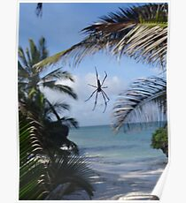 Spider By The Sea - Diani Beach Poster