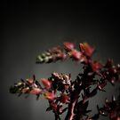succulent flower by wellman