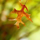 Hanging By A Thread by TrinityCentaur