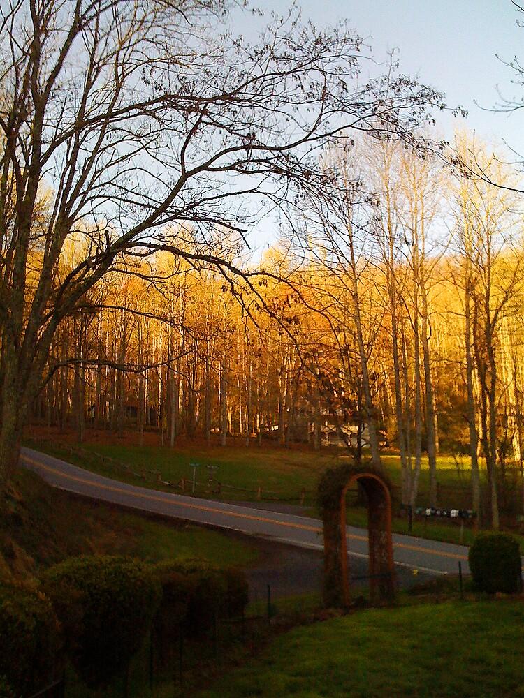 Golden Sunrise through the Trees by BigcityBrooke