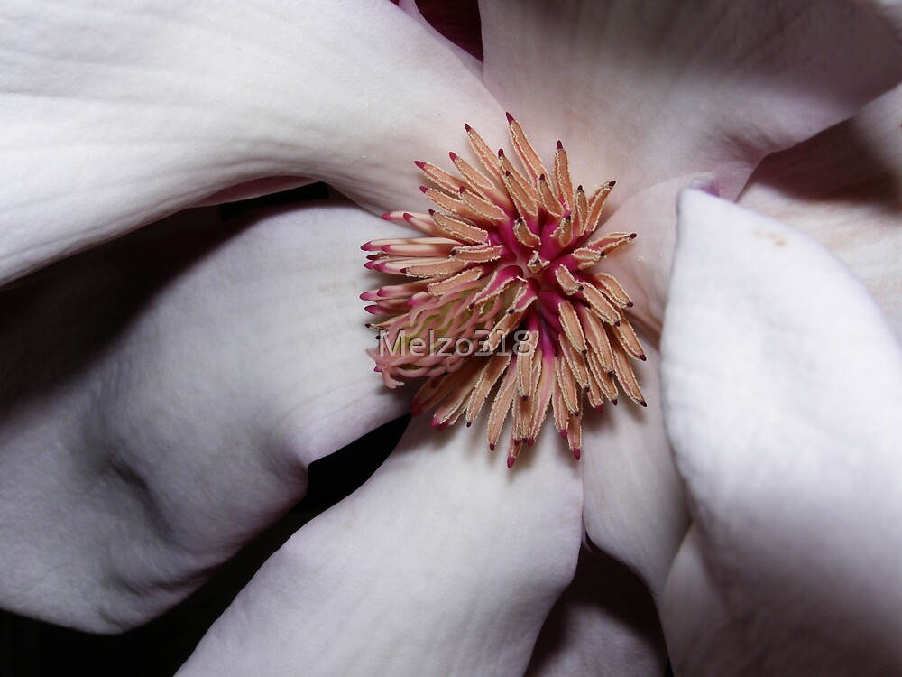 April's Magnolia by Melzo318