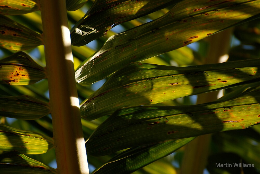 Fronds by Martin Williams