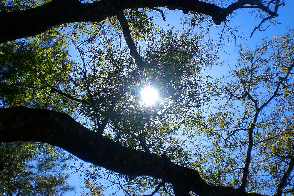 Florida Sunshine by BigcityBrooke