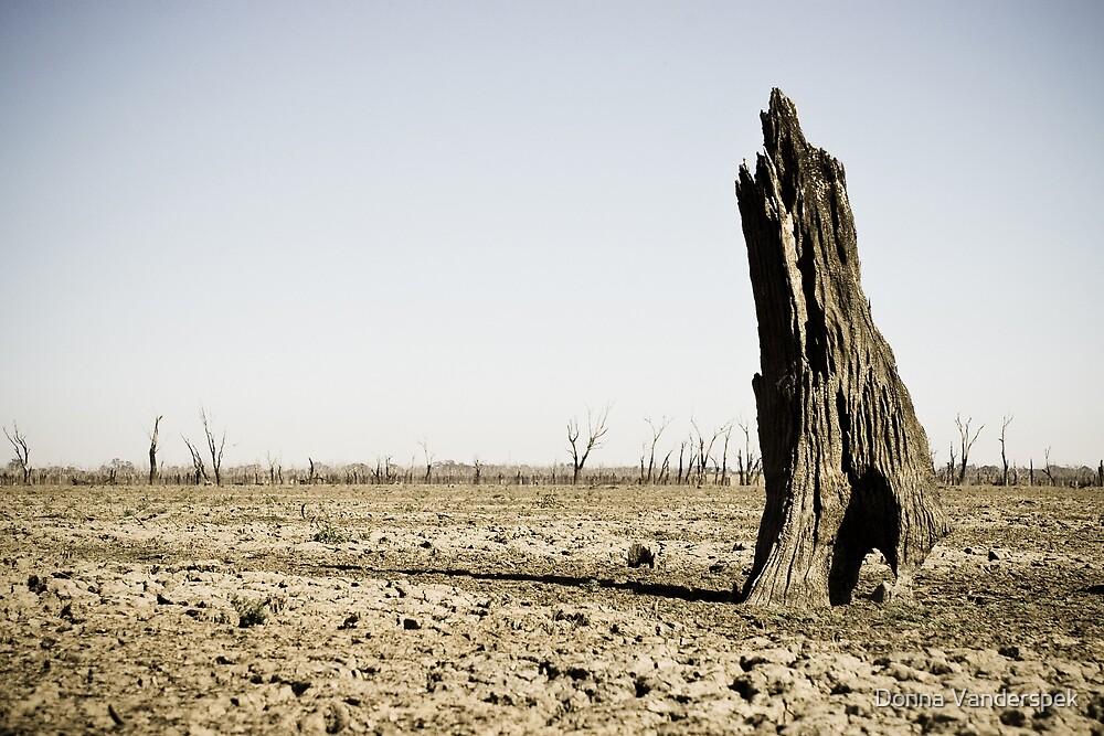the old stump by Donna Vanderspek