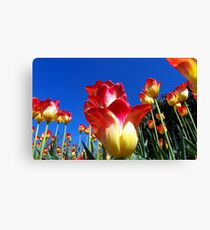 It's A Tulip Sky Canvas Print