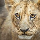 Lion Cub by Neville Jones