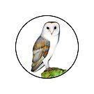 Barn Owl Bird Watercolor Painting Wildlife Artwork by Alison Langridge