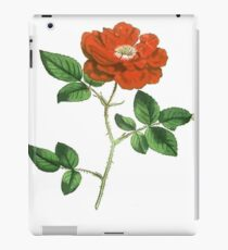 Vintage Red Rose Isolated on White iPad Case/Skin