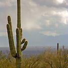 Rainstorm Near Tucson by Chris Clarke