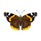 Red Admiral Butterfly Watercolor Painting Wildlife Artwork by Alison Langridge