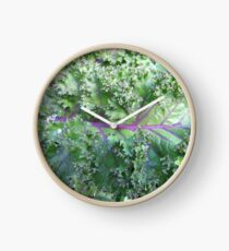 Fresh Kale  Clock