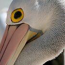 Pelican by ingridrob