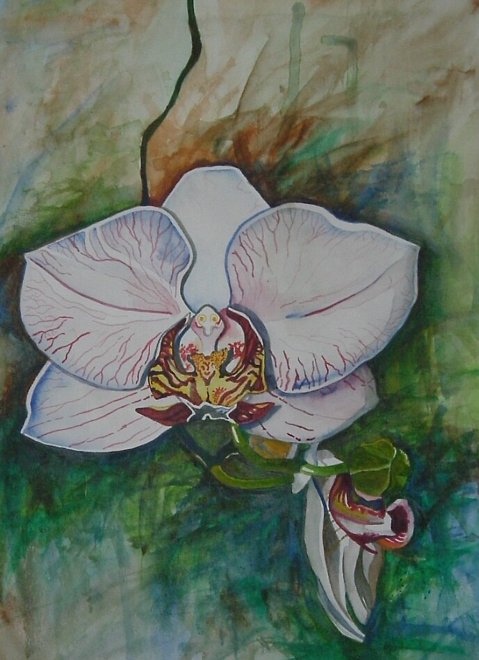 White Orchid by Megan Lane