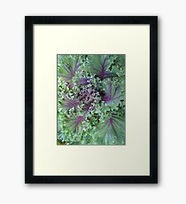 Fresh Red Kale From the Garden Framed Print
