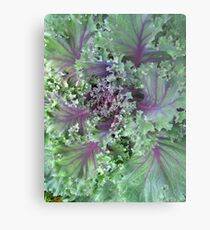 Fresh Red Kale From the Garden Metal Print