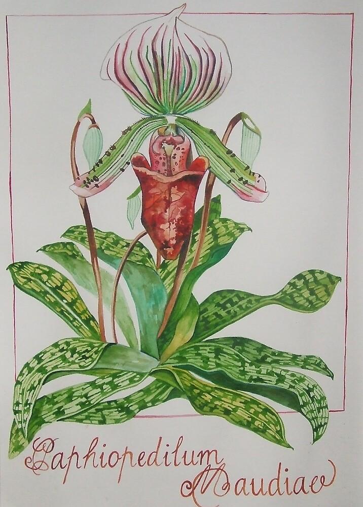 Botanical Illustration by Megan Lane