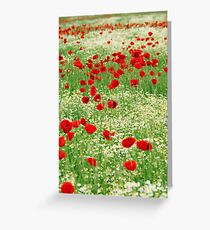 poppy and chamomile wild flowers meadow Greeting Card