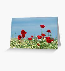 red poppy and chamomile wild flowers Greeting Card