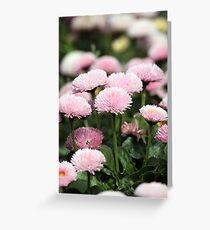 daisy flower garden spring season Greeting Card