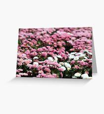 daisy flower garden spring season nature background Greeting Card