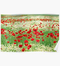 poppy and chamomile wild flowers meadow Poster