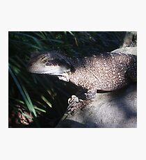 Lizard at Taronga Zoo Photographic Print