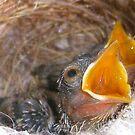 baby birds by djTrickyOne