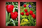 Red Tulips by missmoneypenny