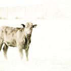 High key heifer by missmoneypenny