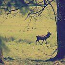 Deer by kishART