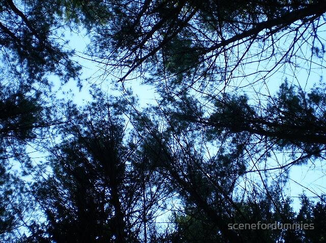 Looking Up by scenefordummies