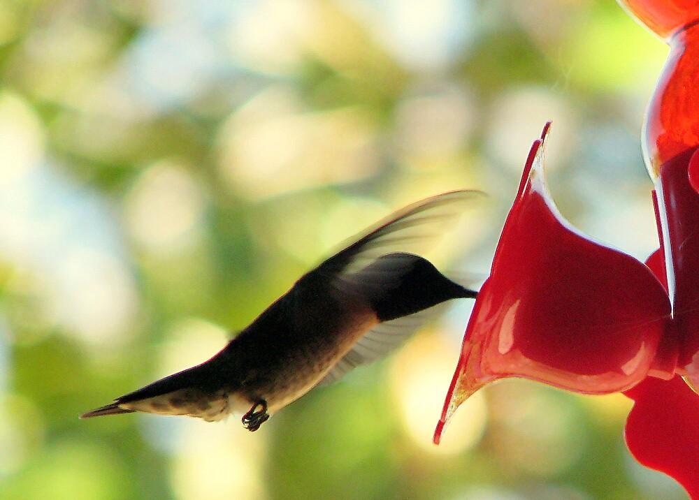 Hummingbird Dances by DottieDees