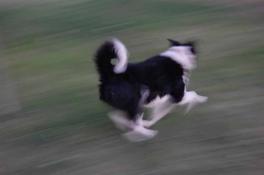Run Girl Run by Teri Billington