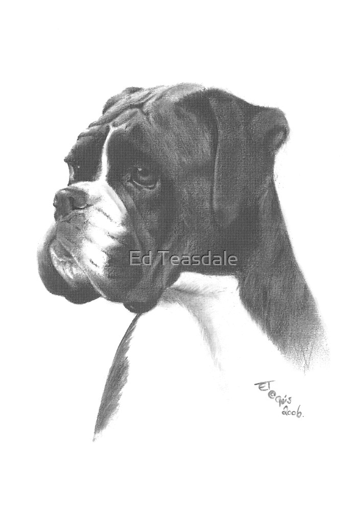 Boxer by Ed Teasdale
