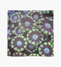 Alveopora coral pattern Scarf