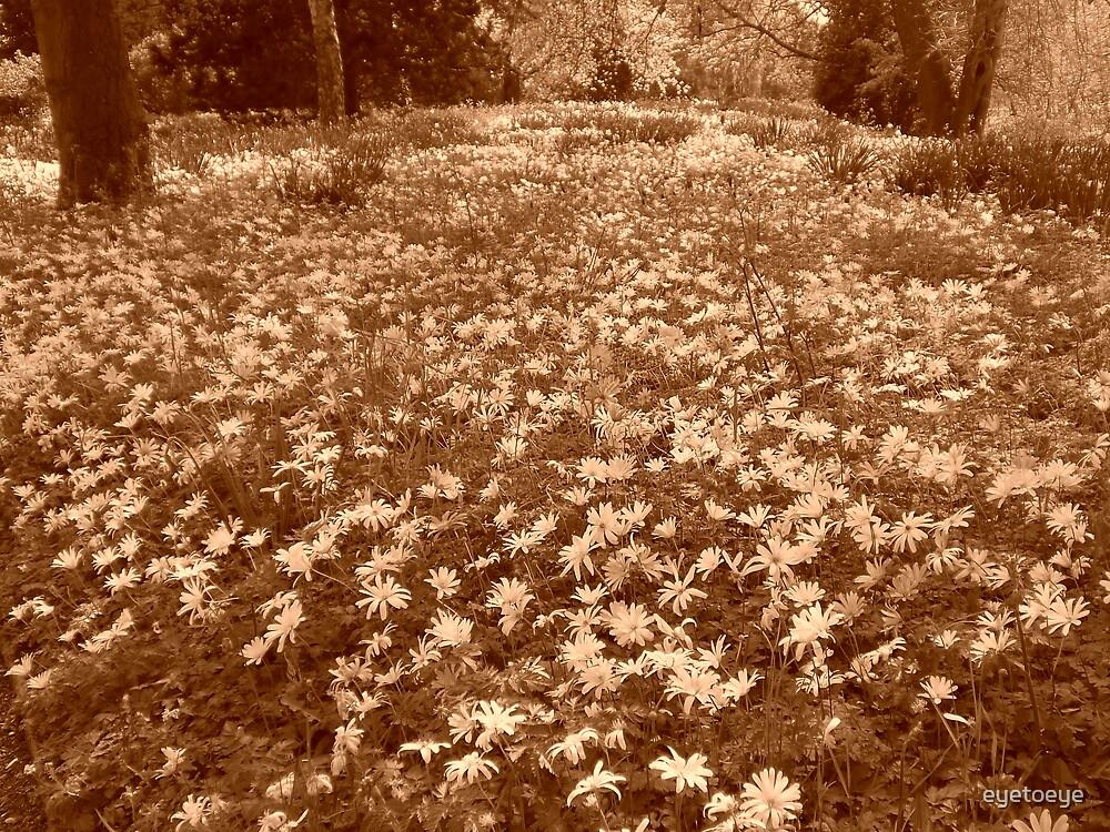 A Carpet of White Flowers by eyetoeye