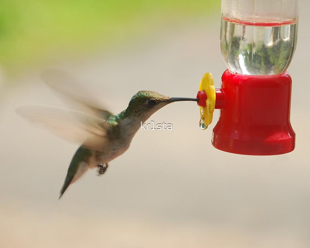 Hummingbird by kr1sta