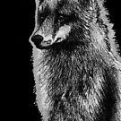 Leucism: Scandinavian Red Fox by NoelleMBrooks