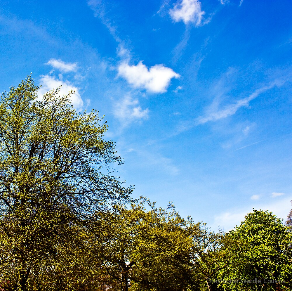 Blue Sky - Green Trees by Christopher Wardle-Cousins