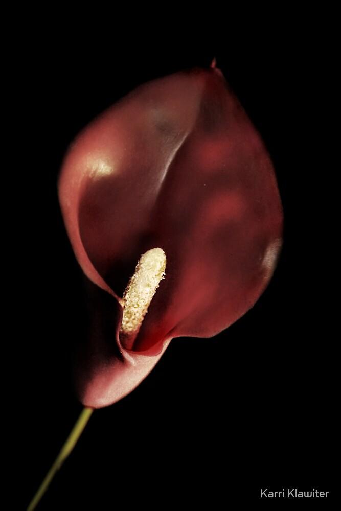Red Calla by Karri Klawiter