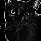 Leucism: Domestic Cat, Burmese Mix by NoelleMBrooks